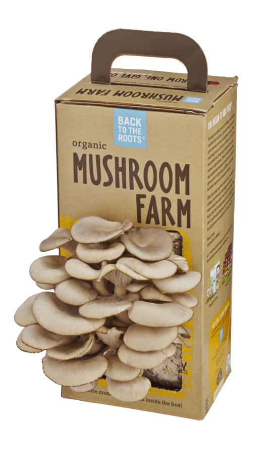 ready to grow mushroom